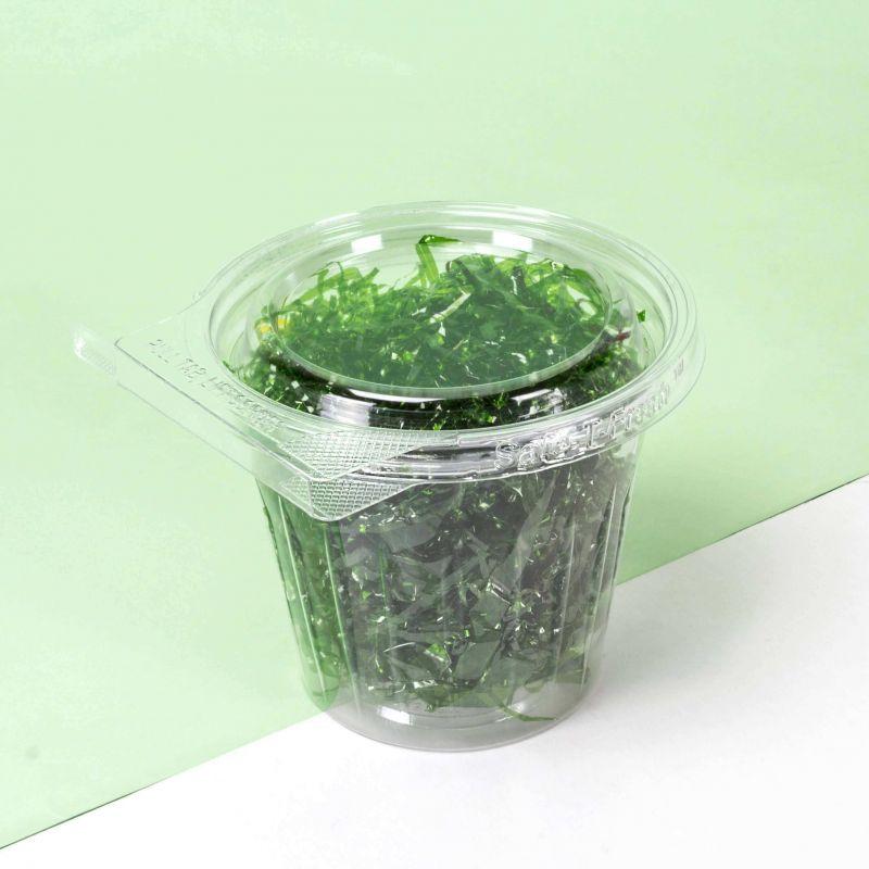 Bicchieri contenitori con sigillo e coperchio piatto 350ml